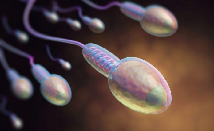 Estinzione uomo occidentale: il suo seme più debole del 52 per cento.